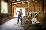 Astrid Kogler beim Kühe füttern.jpg