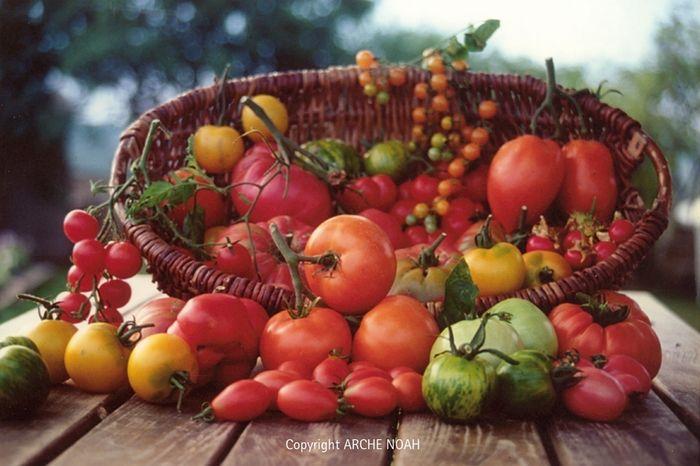Raritäten: Schwerpunkt Fruchtgemüse - von Tomaten bis Melanzani © Arche Noah