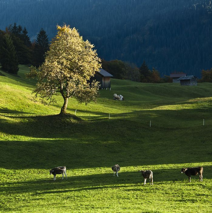 Alpe © Vorarlberg Redaktion