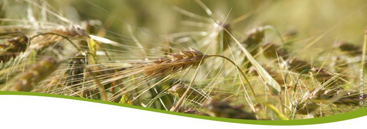 Getreide1