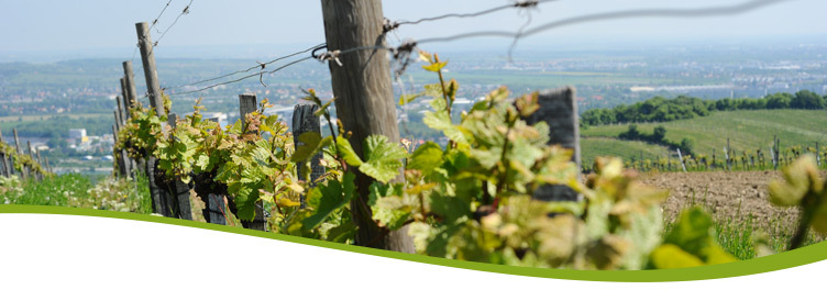 Weinbau LK Wien