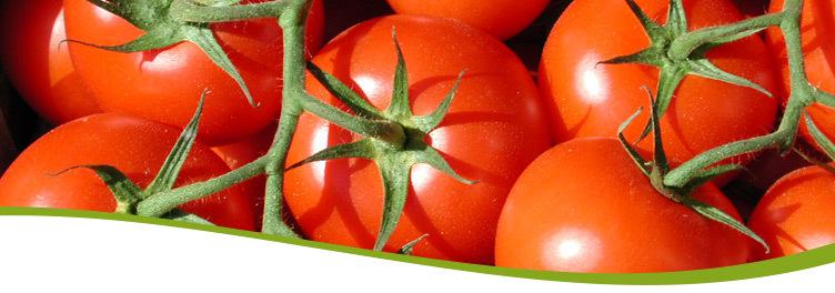 Tomaten LK Wien