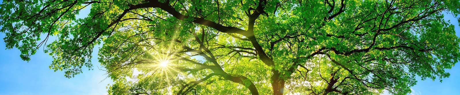 Bildung mit Weitblick © Smileus - Fotolia.com