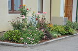 DSC_6088 © LK NÖ, Gartenbau