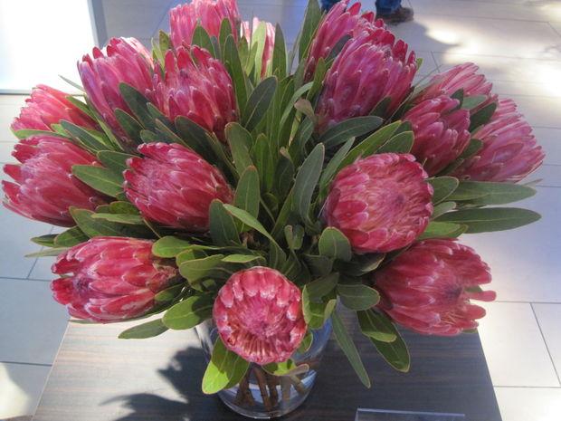 blumenstrauss trocknen die protea ist ein muss fa 1 4 r jeden winterlichen blumenstraua einzigartige schnittblume schma ckt vase bis zu drei wochen lang glycerin