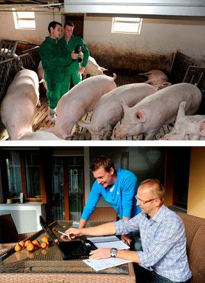 Titelbilder AK Schwein © Foto Philipp