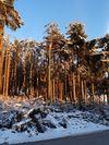 Frostsch�den © LK N�/Sinn