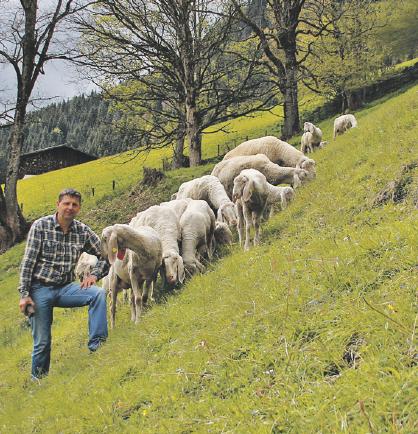 Betrieb fleiss in goldegg weng landwirtschaftskammer for Boden 10 goldegg