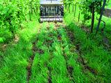 Einbringung mineralischer Dünger in den Unterboden mittels Mulchbodenlockerer mit Düngeraufsatz ©K. Hanak, HBLA und BA Klosterneuburg