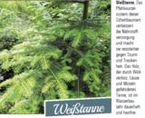 ©LK Steiermark/Forst