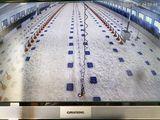Vor dem Einstallen der Küken legen Schlögelhofers zusätzlich zu den Futterbahnen mit Futter befüllte Folien aus, die in Obstschachteln für gelegtes Obst üblich sind. Das Rascheln der Folien animiert die Küken zum Fressen. ©Fam. Schlögelhofer