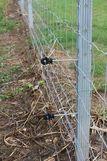 Untergrabungsschutz Litze ©Beratungsteam Schweinehaltung/LK Niederösterreich