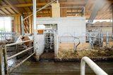 Drei-Wegeselektion: links geht die Kuh zurück zur Herde, der Geradeausgang endet in der Selektierbucht mit Liegebuchten; quer entlang der Roboterwand führt ein Gang in eine Strohbucht oder zur Behandlung. ©Josef Rechberger/LK Niederösterreich