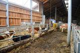 Der Melkroboter wurde in das bestehende Melkstandgebäude eingebaut und der Kuhstall durch Zubau für die Trockensteher mit einer Zweiflächenbucht erweitert. Der bestehende Liegebuchtenstall ist für die melkenden Tiere gut genützt. ©Josef Rechberger/LK Niederösterreich