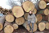 Seit 1977 hat sie immer mehr auf Vermarktung und Verarbeitung von Laubholz gesetzt. ©Paula Pöchlauer-Kozel/LK Niederösterreich