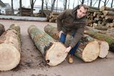 """LK Forstberater Uli Schwaiger zeigt auf den Holzfehler """"Ringschäle"""", der Qualitätsabzüge bringt.  ©Paula Pöchlauer-Kozel/LK Niederösterreich"""