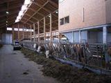 Stall  Quelle Gstöttinger.jpg