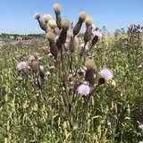 Blüte + Samen.jpg