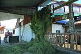 Futterbrücke 2.jpg