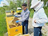 Begutachtung offener Bienenstock 3.jpg
