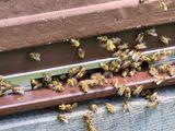 Bienenstock Flugloch 2.jpg