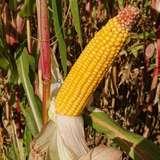 10 Bio-Ackerbauberatertreffen in OÖ.jpg