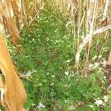 13 Bio-Ackerbauberatertreffen in OÖ.jpg