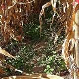 14 Bio-Ackerbauberatertreffen in OÖ.jpg